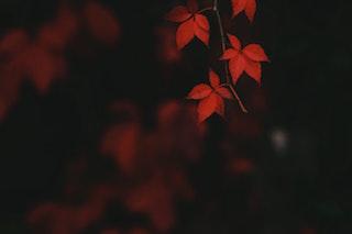 feuilles d'automne paroisse houillescarrières